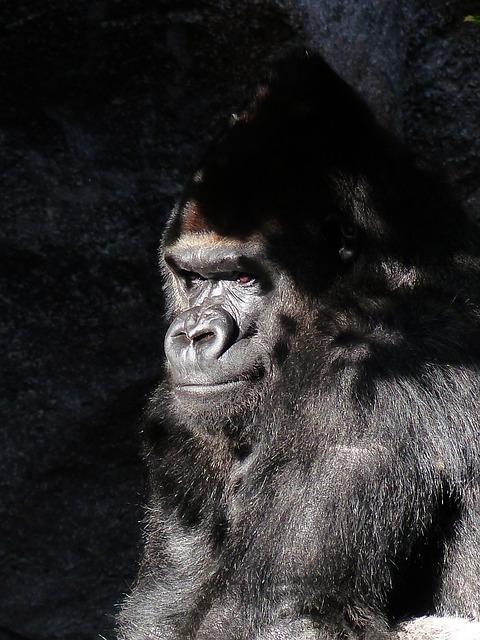 gorilla, tension, subtext, feelings