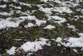 Spring was starting to show in Ljubljana