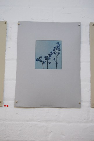 Hyacanthoides Ravensdale