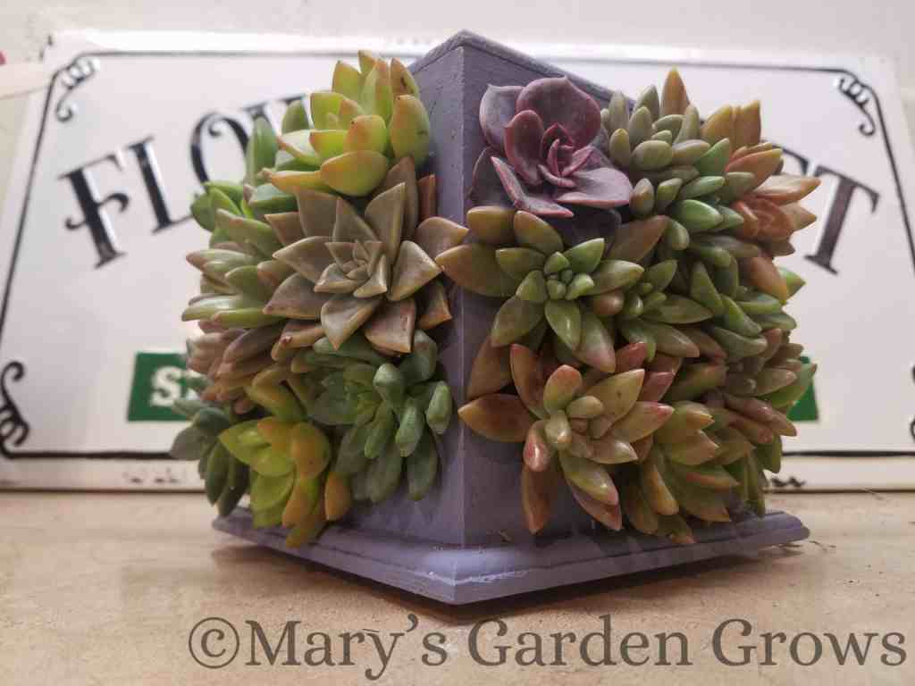 4 Way Succulent Frame
