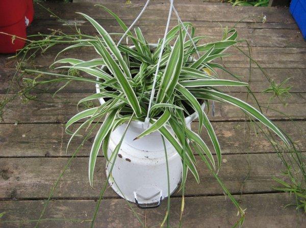 house plants de-stress