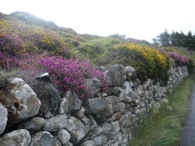 Steinur og blomster