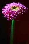 MaryStackerPhotography's photo