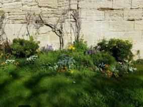 Rocher des Doms garden blooming in March