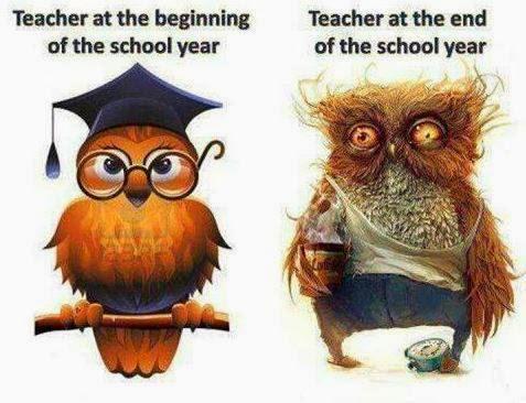 OwlTeachers