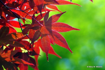 0429 - Red leaves on green leaves