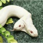 幸せを呼ぶ白い生物は蛇の他にもいる?見るだけで幸福になれる画像まとめ