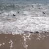 海水浴場でサメに襲われた時の対処法は?ビーチに現れた動画まとめ