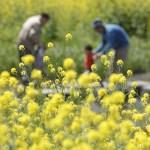 希望の党の花粉症ゼロの方法と実現可能なの?公約内容の予想と考察!
