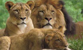 Masai Mara Holidays