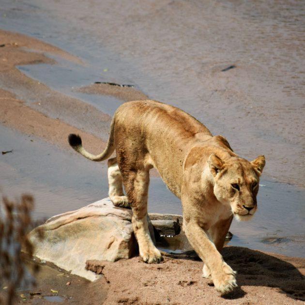 4 Day Masai Mara Safari