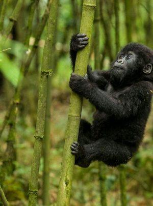 Rwanda safari tours & holidays
