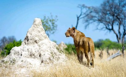 3 Day Akagera National Park Safari