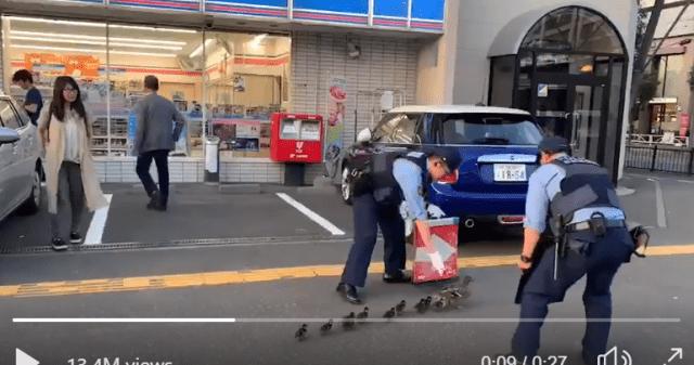 Японский спецназ охраняет мать с 10 детьми … которые все утки