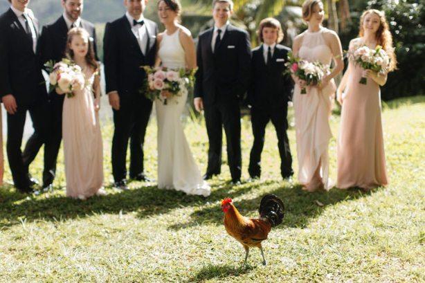 chicken interrupting portraits