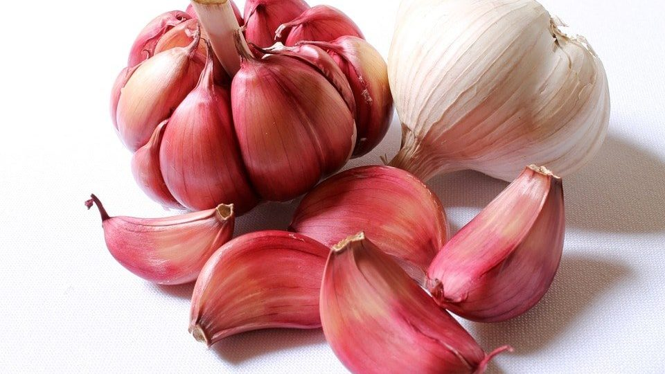 The proven health benefits of garlic for fewer sick days and a healthy weight