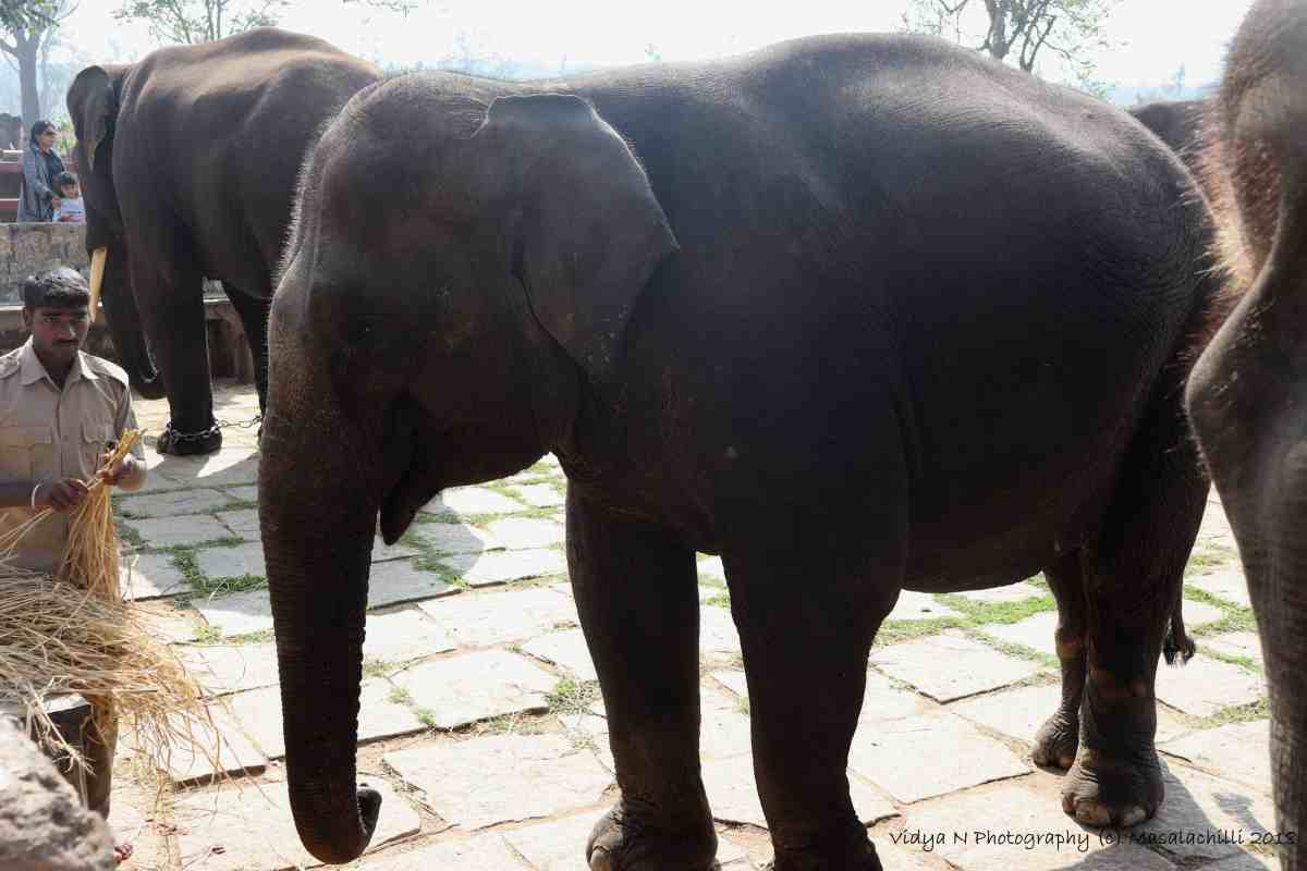 Dubare Elephant Camp 3