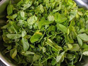 Methi or Fenugreek Leaves