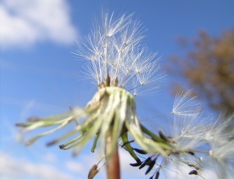 Get a 'Natural Fix' for Hay Fever
