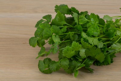 coriander leaves heap on the wooden background