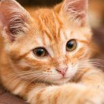 猫アレルギーで咳が止まらない時の治し方!市販の薬のオススメも紹介!