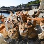猫アレルギーの症状に発熱があるのは本当??原因や対処法を紹介!!