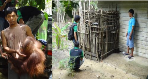 "Left: The previous owner carrying Molly to the transport cage of the forestry police, who confiscated her, to bring her to SOC. Right: Molly's previous ""home"" for two years with SOC staff on the left and a family member of the owner on the right."