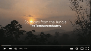 Tengkawang jungle factory video