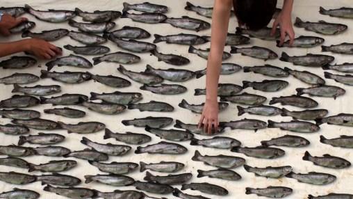 100fish01