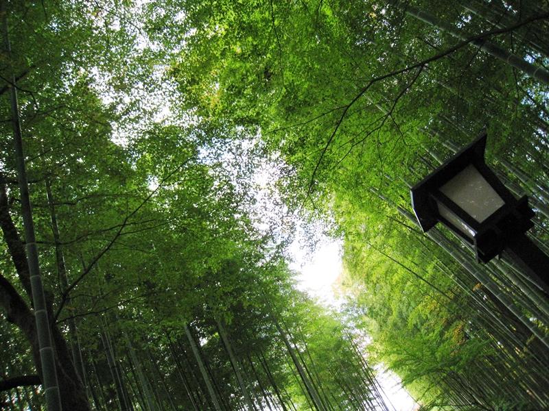 竹林の緑の間に空がみえる