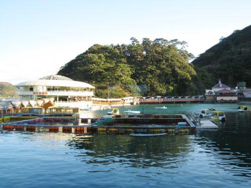 【下田海中水族館】迫力のイルカショーがすごい!