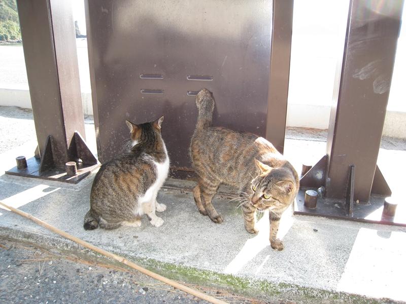 ネコが数匹いる
