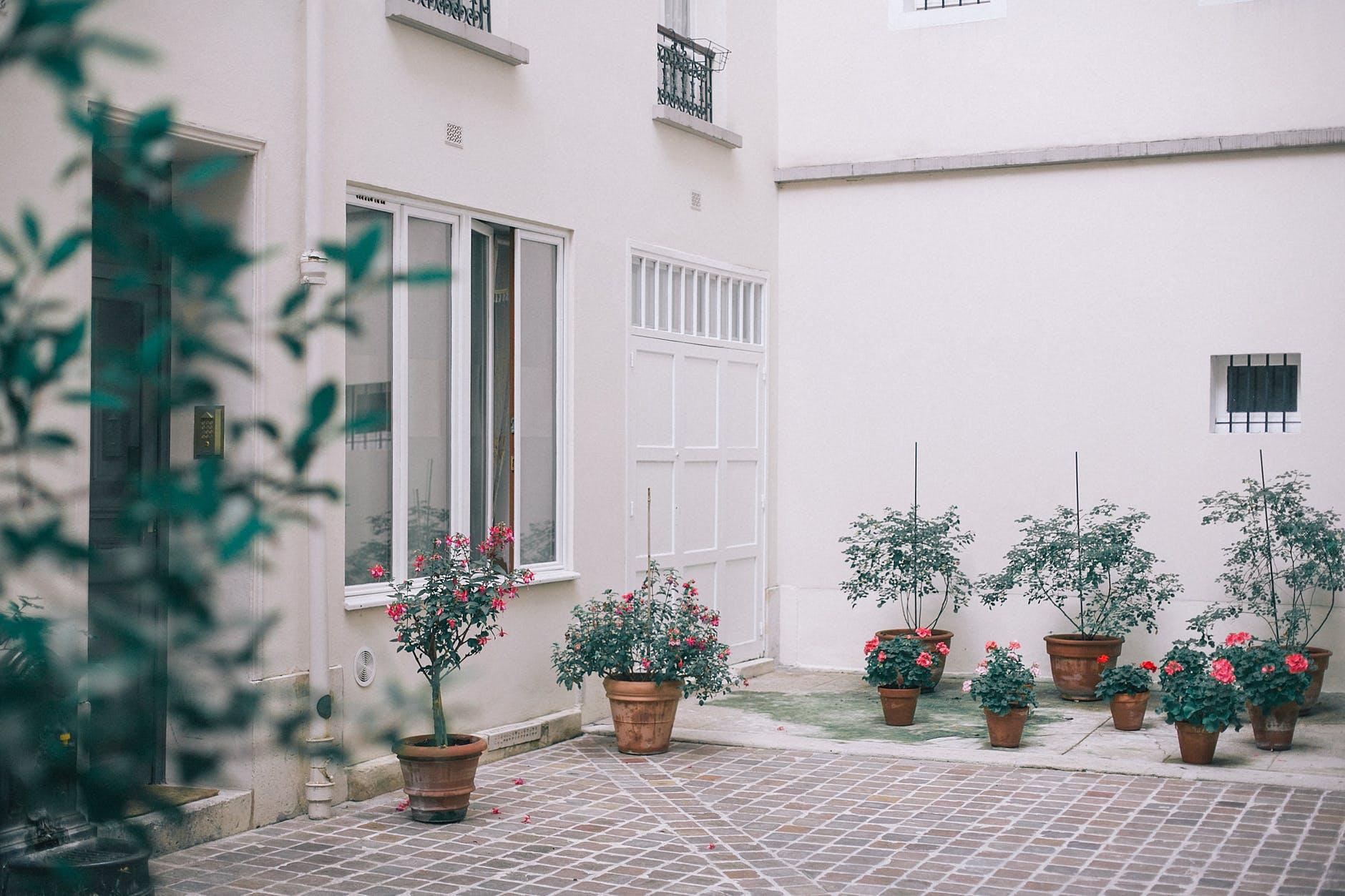 House decorated with potted flowers and plants. 7 Tips Sehat Bersih-bersih Rumah di Masa Pandemi