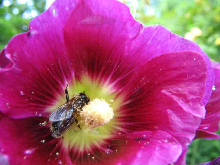 penyerbukan alami tanaman bunga anggrek