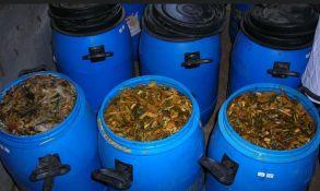 cara membuat fermentasi pakan kambing ternak