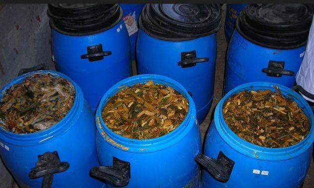 cara membuat fermentasi pakan kambing ternak dari gedebog