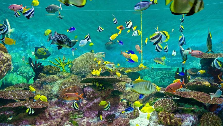 jenis jenis ikan hias yang cocok sebagai ikan aquascape