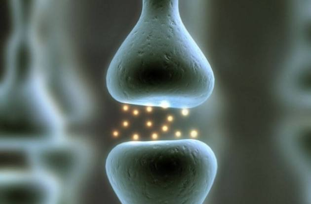 Manfaat Minum Kopi Hitam Tanpa Gula Dapat Meningkatkan Kesehatan Tulang