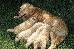 Destete del cachorro