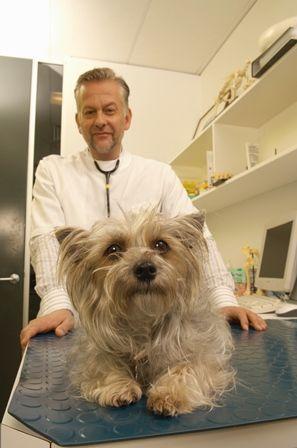 Diarreas en perros