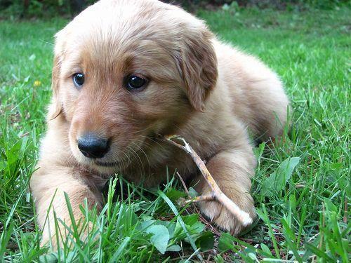 ¿Tiene carencia de calcio tu perro?