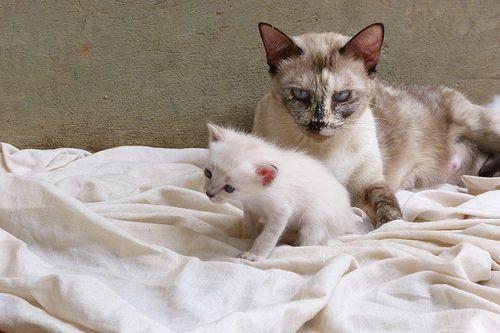 gata rechaza a sus crías