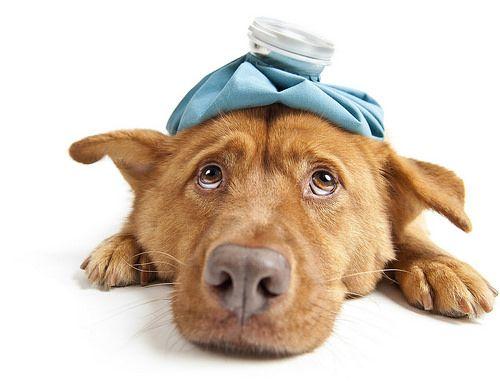 Seguros veterinarios