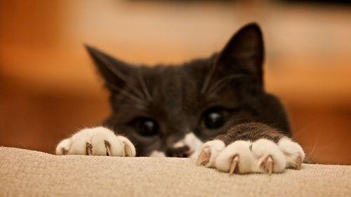 Cómo mantener las uñas de tu gato de forma correcta