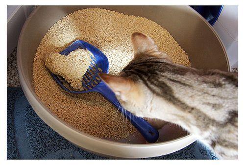 ¿Qué tipo de arena para gatos necesito?