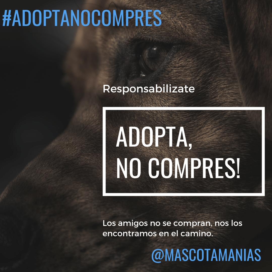 https://mascotamanias.com/adoptanocompres/