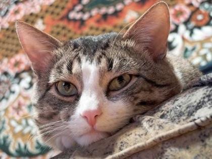 El gato domestico y su salud