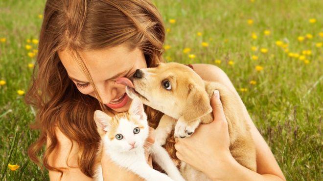 Los mejores consejos para la convivencia entre perros y gatos