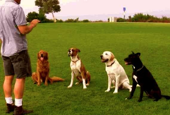 Cómo adiestrar un perro paso a paso