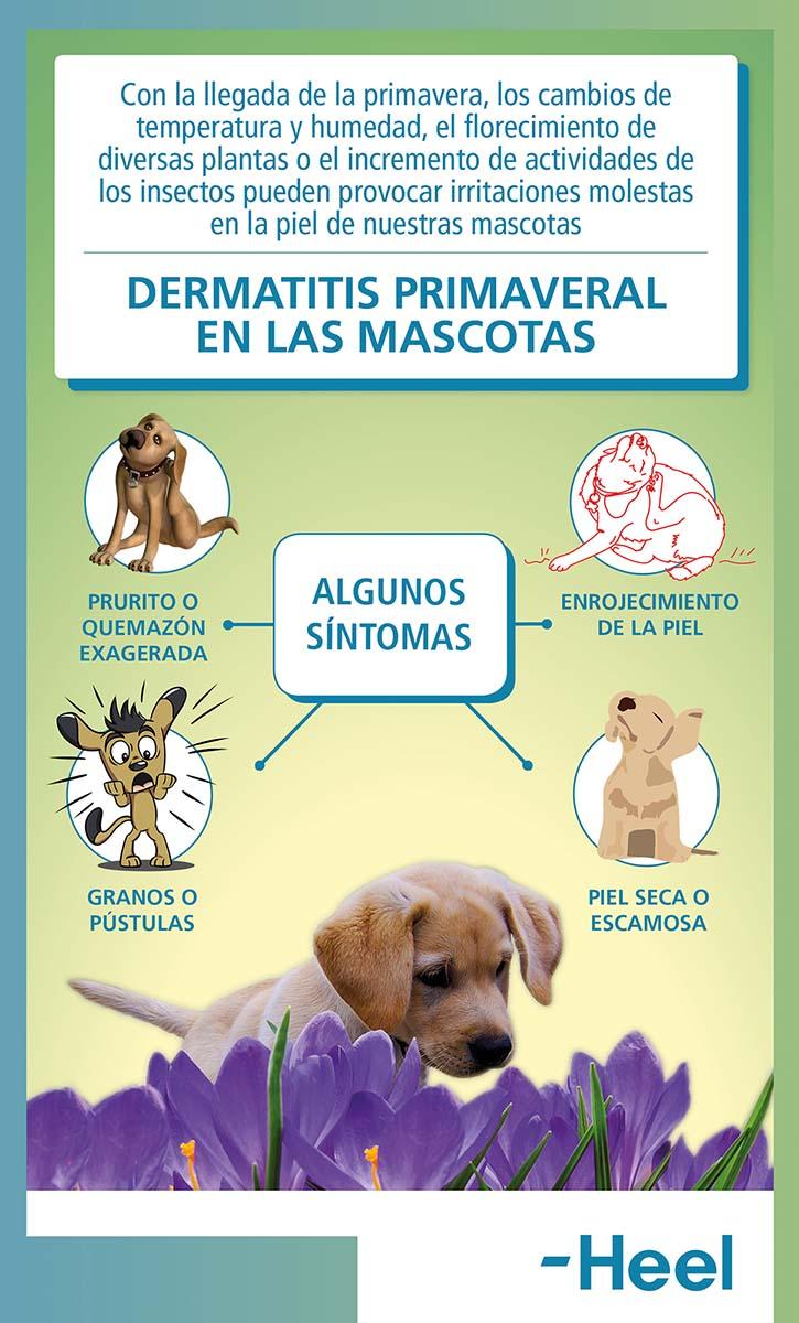 ¿Cuáles son los síntomas de la dermatitis en perros? - HeelVet